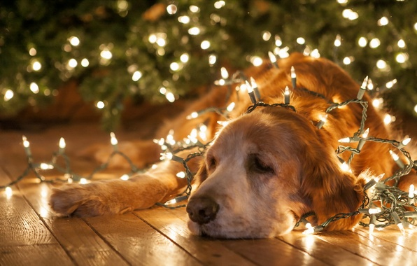 Picture background, holiday, dog