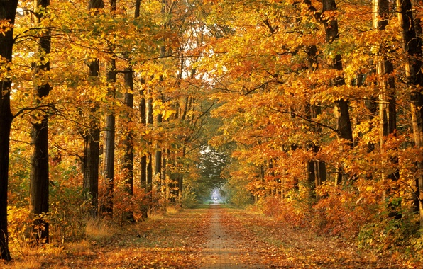 Picture road, autumn, forest, trees, nature, autumn time