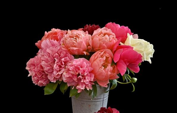 Picture bouquet, bucket, black background, peonies