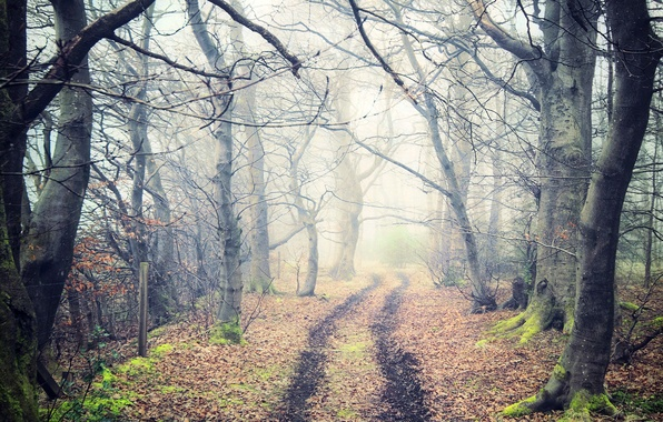 Picture road, autumn, forest, leaves, trees, nature, fog, trail