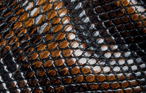 Picture snakes, scales, leather, animal texture