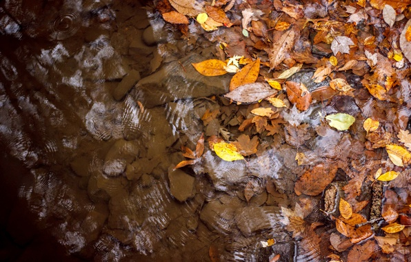 Picture autumn, leaves, water