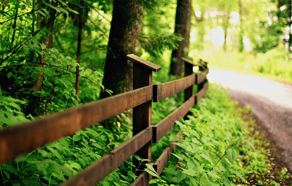 Picture greens, leaves, macro, trees, nature, background, tree, widescreen, Wallpaper, the fence, fence, the fence, track, …