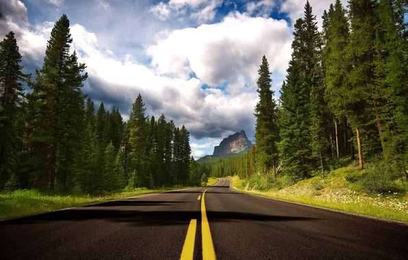 Picture forest, trees, mountains, markup, Road