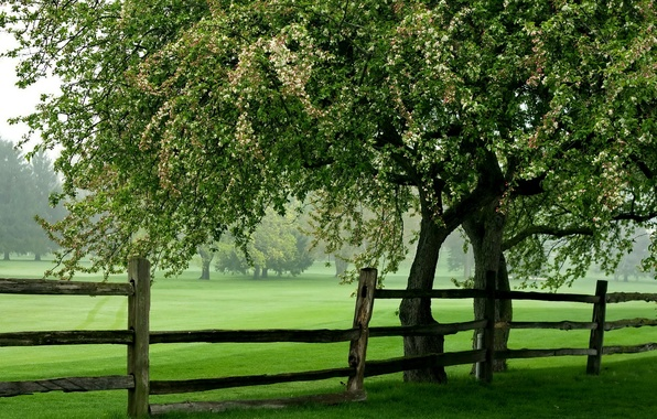 Picture field, summer, tree, the fence