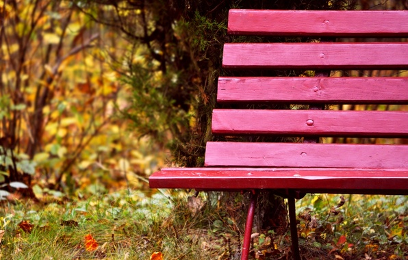 Picture autumn, grass, leaves, trees, bench, nature, Park, Board, shop, shop, bench