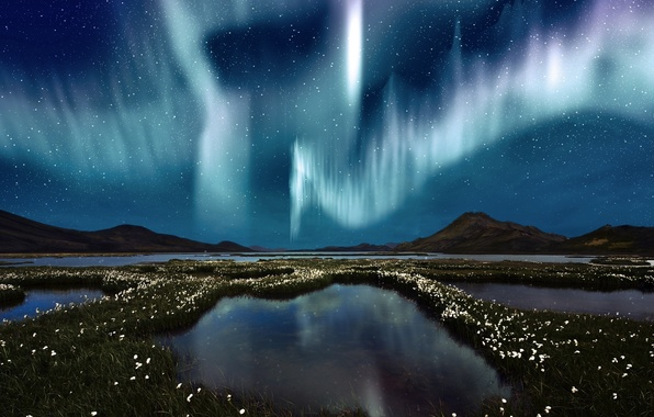 Picture the sky, water, stars, flowers, Northern lights, swamp