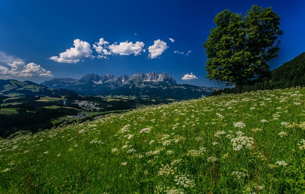 Picture flowers, mountains, tree, Austria, Alps, meadow, Austria, Alps, Tyrol, Tyrol, Kitzbühel, Kitzbühel