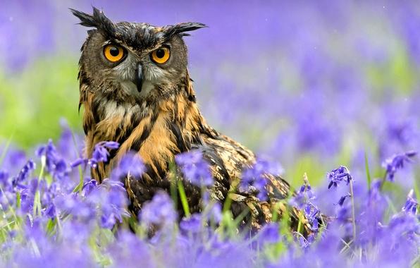 Picture flowers, rain, owl, bird, spring, Owl
