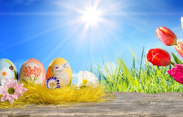Picture grass, the sun, flowers, eggs, spring, Easter, tulips, sunshine, happy, tulips, spring, eggs, easter