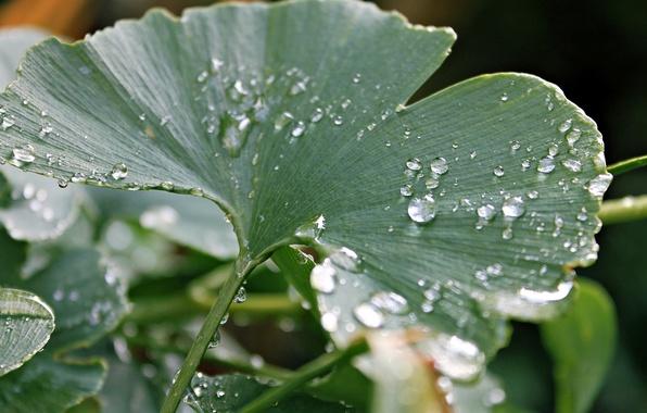 Picture drops, macro, sheet, Rosa, rain, round