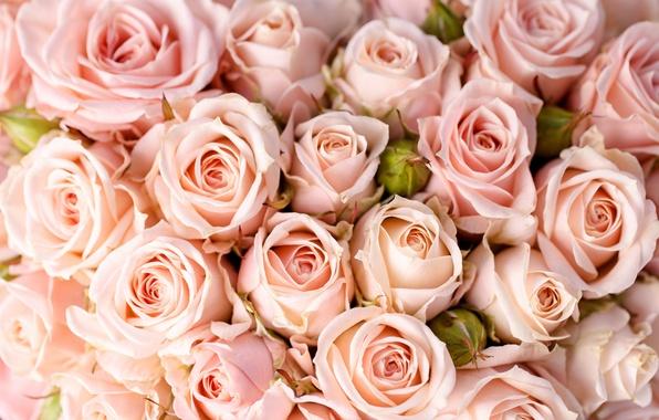 Picture flowers, roses, bouquet, flowers, bouquet, roses