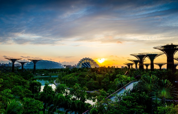 Picture trees, bridge, design, Park, dawn, garden, Singapore, river, structure, Gardens by the Bay