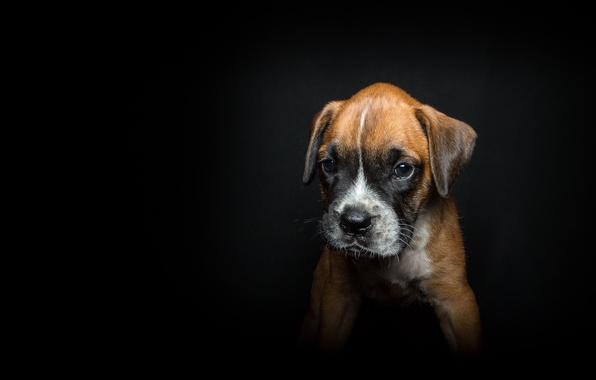 Picture background, each, black, dog, puppy