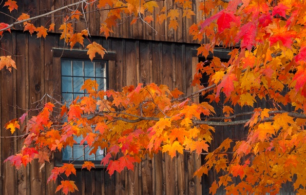 Picture autumn, leaves, house, branch, window