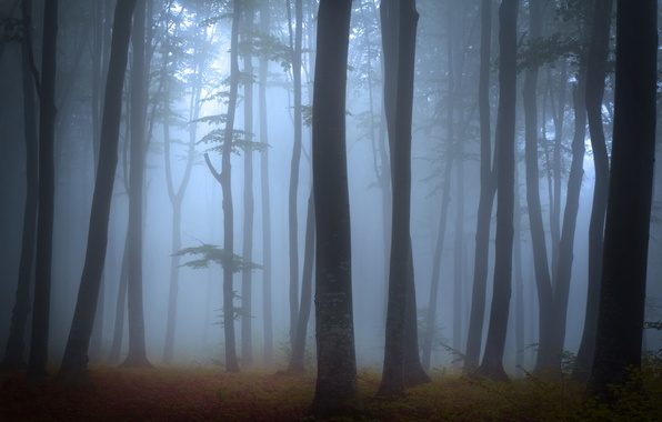 Picture forest, trees, landscape, nature, fog