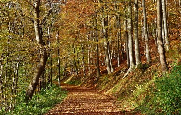 tree path track leaves - photo #18
