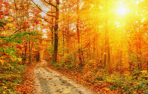 Picture road, autumn, forest, leaves, trees, nature, photo, rays of light