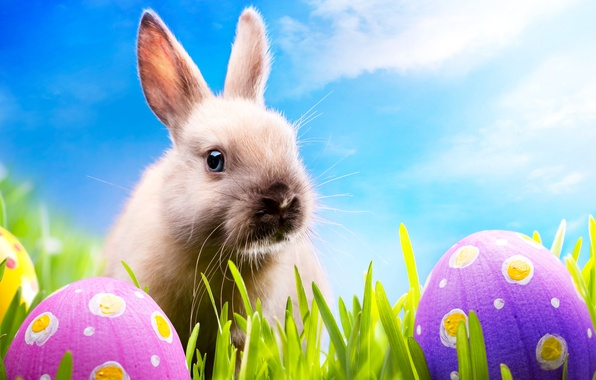 Picture grass, eggs, spring, rabbit, meadow, Easter, grass, sunshine, rabbit, spring, blue sky, eggs, easter, bunny, …