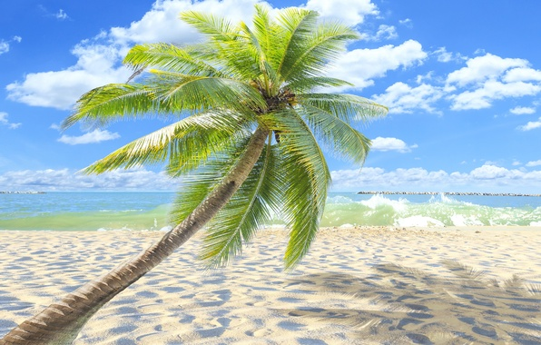 Photo wallpaper palm trees, paradise, shore, palms, beach, sea, sand, sea, sand, shore, beach, summer, tropical