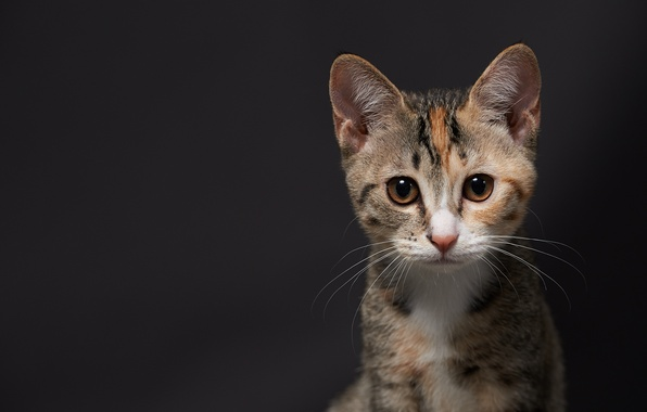 Picture cat, kitty, background, muzzle