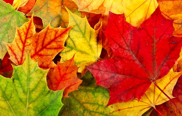 Picture autumn, leaves, foliage, yellow, green, red, orange, fallen