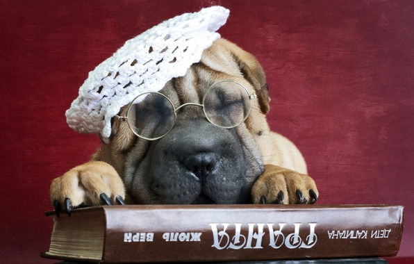 Picture each, dog, glasses, book, Sharpe