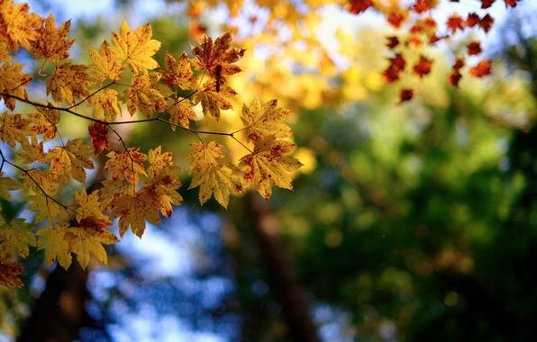 Picture autumn, macro, branches, nature, foliage