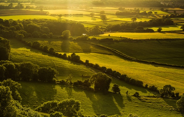 Picture greens, field, light, trees, landscape, nature, hills, England, the evening, UK, England, Great Britain, Hassocks
