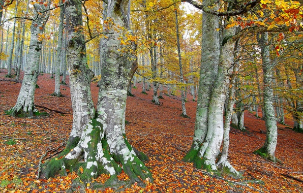 Picture autumn, forest, leaves, trees, slope, hill