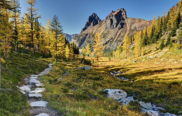 Picture forest, trees, mountains, Canada, Canada, path, Yoho National Park