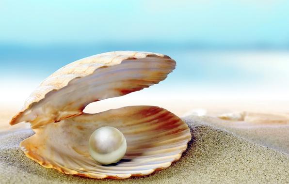 Picture sand, sea, beach, shell, beach, sea, sand, shore, seashell, pearl, perl