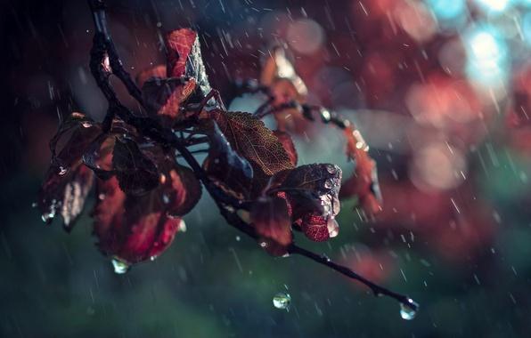 Picture leaves, drops, macro, rain, branch, bokeh