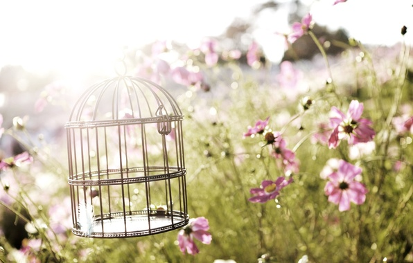 Picture flowers, nature, nature, flowers, birdcage, birdcage