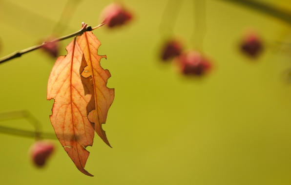 Picture leaves, background, branch, autumn