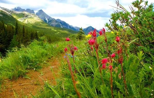 Picture the sky, grass, landscape, flowers, mountains, path