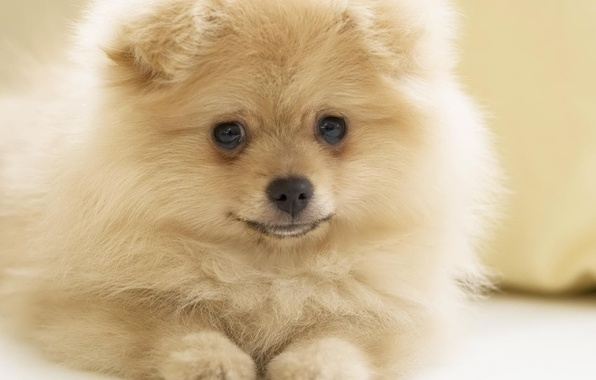 Picture sweetheart, dog, beautiful
