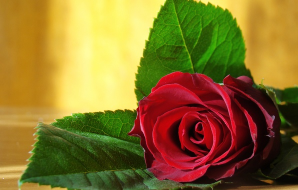 Picture love, flowers, photo, romance, rose, beauty, colors, photos, red, love, rose, beautiful, still life, red …