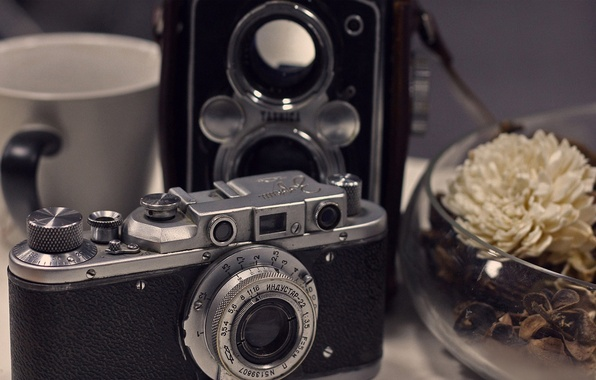 Picture flower, retro, the camera, Cup, vase, still life, items, chrysanthemum