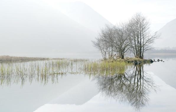 Picture trees, landscape, fog, lake, morning