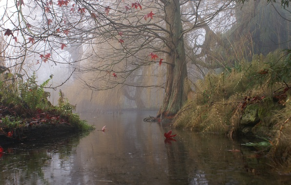 Picture autumn, fog, river, tree, England
