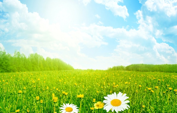 Picture field, summer, the sky, grass, the sun, clouds, flowers, chamomile, meadow