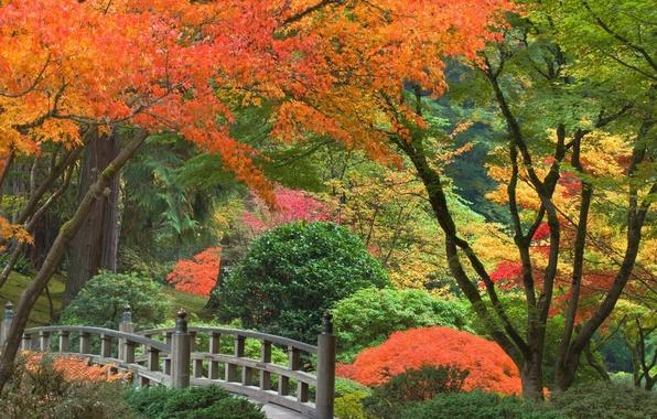 Picture autumn, trees, Park, Japan, the bridge, the bushes