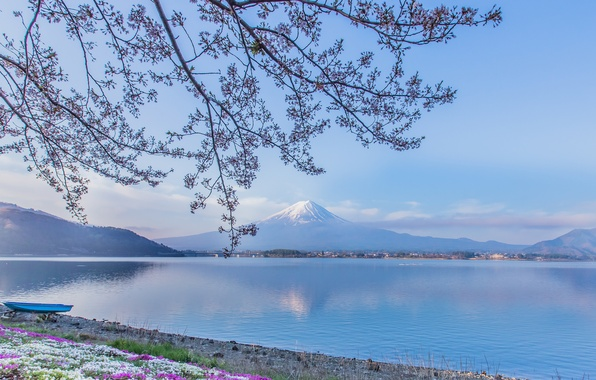 Picture flowers, branches, lake, boat, mountain, the volcano, Japan, Fuji, Japan, Mount Fuji, Fuji, Lake Kawaguchi, …