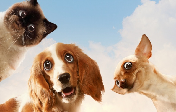 Picture cat, dogs, the sky, look, humor