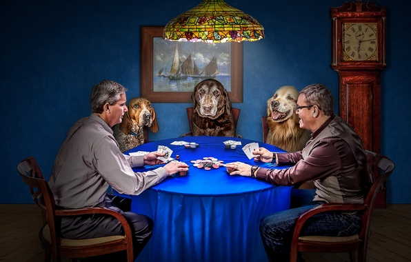 Picture dogs, card, the game, watch, chips, poker, men