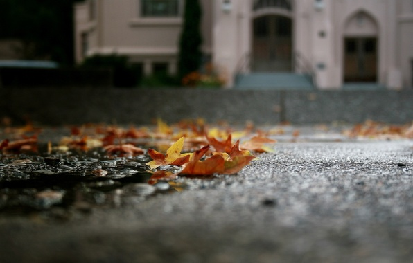 Picture autumn, asphalt, leaves, macro, puddle, fallen