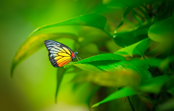 Picture leaves, pattern, butterfly, plant, wings, insect