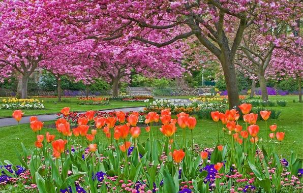 Picture trees, flowers, Park, plants, garden, flowerbed