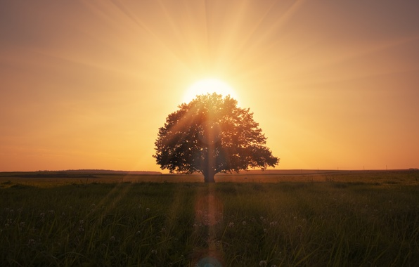 Picture landscape, nature, lonely tree, landscape, nature, lonely tree, beautiful scene, magical sunrise, beautiful scene, magical …
